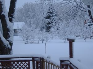 Fresh winter snow in my backyard in De Pere, Wisconsin.